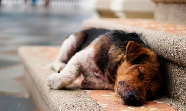 Adoção de cães e gatos em Senador Canedo