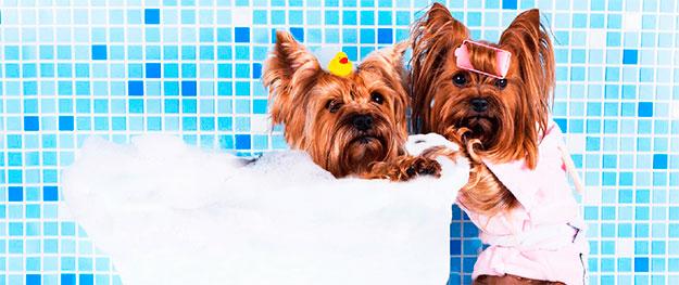 Banho e Tosa no setor Bela Vista
