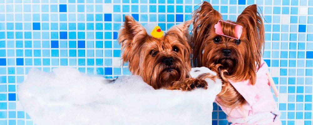 Promoção de banho e tosa no Setor Bueno